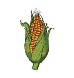 Corn agriculture healthy food icon graphic vector