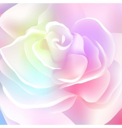 Flower rose blossom bloom floral background summer vector