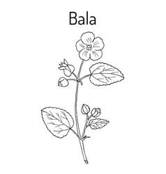 Bala sida cordifolia or country mallow flannel vector
