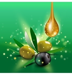 Green and black olives with leaves vector