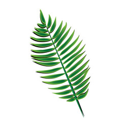 Green palm leaf vector