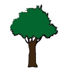 Natural tree foliage plant botanical vector