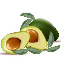 Avocado realistic on white background vector