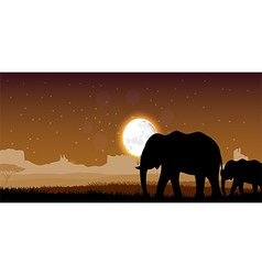 Elephant family sunset vector image