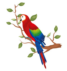 Tropical parrot in branch tree vector
