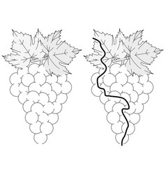 Easy grapes maze vector