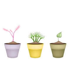 Pink Flowers and Green Leaves in Terracotta Pots vector image vector image