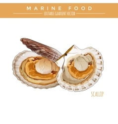 Scallop marine food vector
