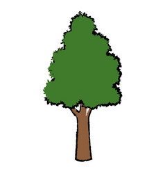 tree for forest park and garden plant natural vector image vector image