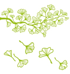 ginkgo branch with leaves vector image