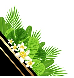 Decorative summer background with green leaves vector image