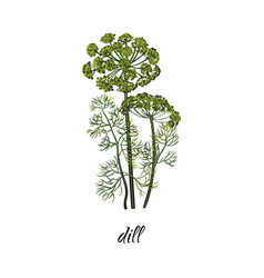 Flat cartoon sketch hand drawn dill vector