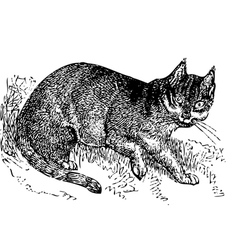 Wild cat old engraving vector