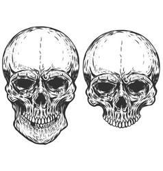 Set of human skulls isolated on white background vector