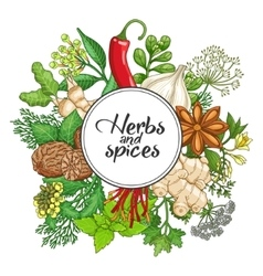 Hot round design with spices and herbs vector