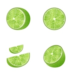 Set of fruit lime vector