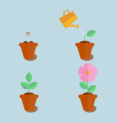 Plant growing stages vector
