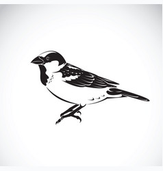 sparrow design on white background bird icon vector image