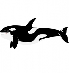 orca killer whale vector image vector image