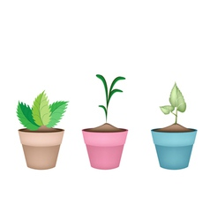 Beautiful green trees in ceramic flower pots vector