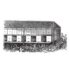 Apiary or Bee yard vintage engraving vector image