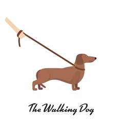 Light Brown Dachshund with a leash vector image vector image