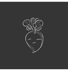 Beet drawn in chalk icon vector