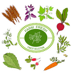 farmers food design logo and vegetables vector image vector image