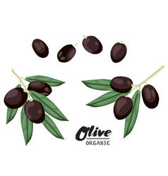 Cartoon black olives ripe green vegetable vector