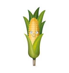 White background with realistic corn cob vector