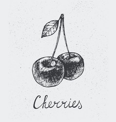 Hand drawn cherries engraving style hand vector