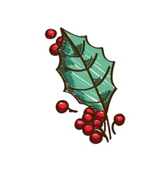 Holly berries and leaf vector