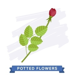 Isolated flower vector