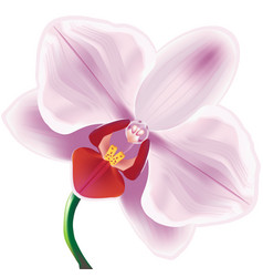 orchid vector image vector image