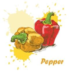 Pepper background vector