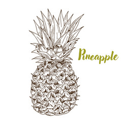 pineapple hand drawn sketch vector image
