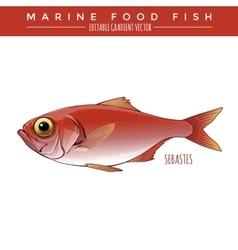 Sebastes marine food fish vector