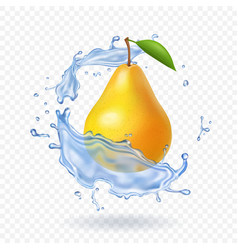 Pear realistic fruit vector