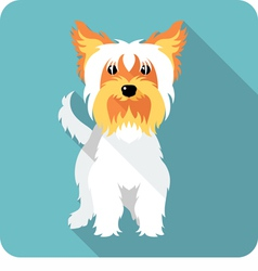 dog Yorkshire terrier standing icon flat design vector image