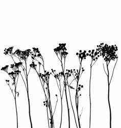Plant  vector