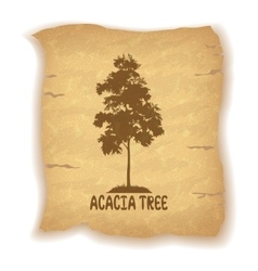 Acacia Tree on Old Paper vector image vector image