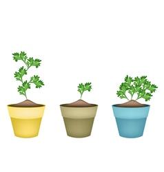 Fresh green coriander in terracotta flower pots vector