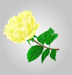 Rose yellow flower stem with leaves and blossoms vector