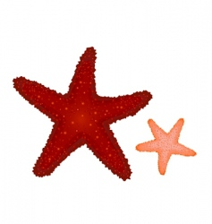 coral starfishes vector image