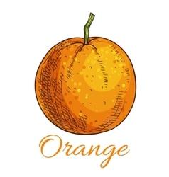 Orange fruit sketch icon vector