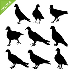pigeon silhouettes vector image vector image