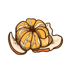 Tropical tangerine sketch vector