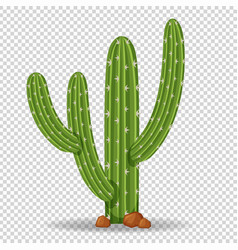 cactus tree on transparent background vector image vector image