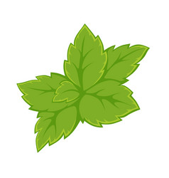 Bright green leaves vector