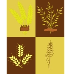 Ears of wheat and oats vector